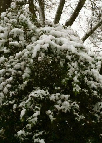 A little weight of snow