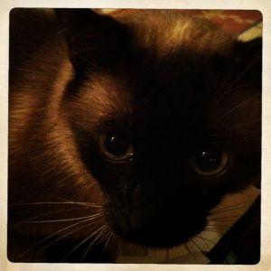 Oliver, awake