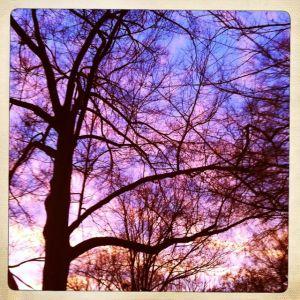 Variation, winter sunset