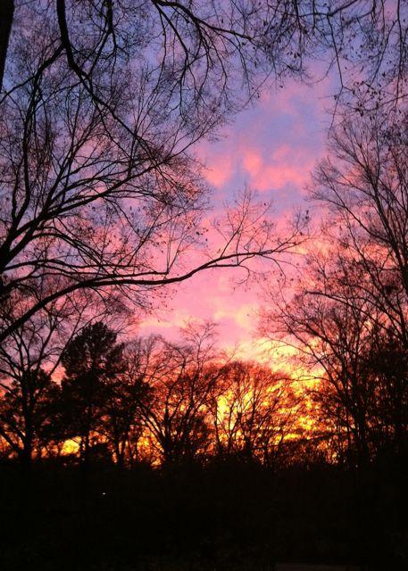 Winter sunset, bare trees