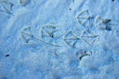 Beachy bird tracks