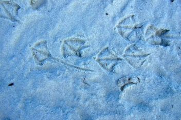 Beachy bird tracks