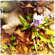 Not-real dove and hyacinth