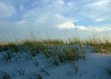 Dunes, late afternoon