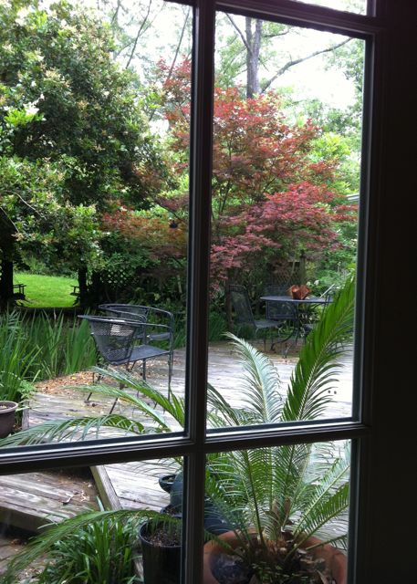 View from the laptop, rainy day